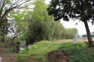 作業前の竹林風景