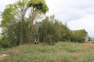 作業が進むと竹林がだいぶ開けてきました