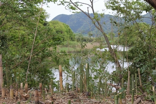 三島側からは今まで見えなかった沼津側の湖面が初めて顔をのぞかせました