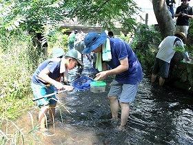 源兵衛川の生き物観察会
