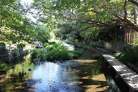 源兵衛川第2ゾーン・水の散歩道