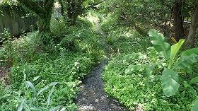 作業場所:源兵衛川中流部・水の苑緑地沿い