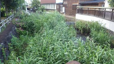 作業場所(源兵衛川中流部・三石神社沿い)