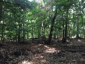 「緒明の森」への名称変更を要望する「街の森」