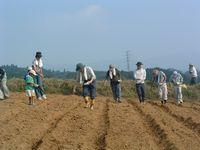 そば畑の耕作と種まき