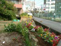 三建会の皆さんも花の植え替えを行っています