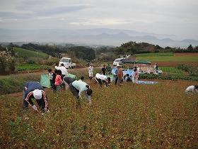 昨年度の収穫・脱穀作業