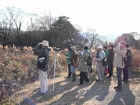 冬鳥観察会の様子