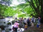 【参加者募集】8/18 鎮守の森探検隊 「狩野川の源流で探そう!森と水の関係」