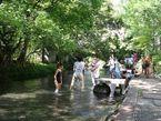 夏の源兵衛川に集う人々