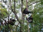 【参加者募集】11/17 鎮守の森探検隊IN天城遊々の森