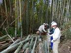 2/19、24-26 竹取物語(竹林伐採・チップ化作業)