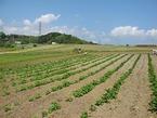 【参加者募集】5/12援農プログラム(元山中)種まき