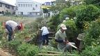 6/25三島梅花藻の里西側隣接・湧水池整備作業を実施