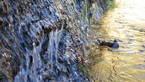 【参加者募集】富士山湧水ヤングインストラクター養成講座②「富士山の生い立ちと三島」