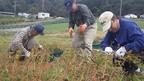 10/31(土)三島そば収穫・脱穀作業を行いました