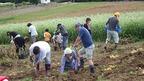 【2/11市内新聞折込】【参加者募集】「三島・農業人育成・農楽校」(平成28年1月~2月・全6回)