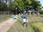 毎年恒例☆稲刈り作業 in 境川・清住緑地