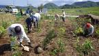 4/29三島市制75周年記念・松毛川「千年の森」づくり植樹作業を実施