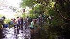 6/12境川・清住緑地の田植えと生き物観察会を行いました