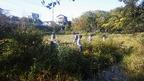 【参加者募集】1/14 境川・清住緑地と三つ又周辺 環境再生ワンデイチャレンジ