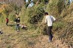 【参加者募集】1/21・22 松毛川(灰塚川)河畔林保全活動:放置竹林の伐採と清掃