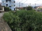 【参加者募集】9/12源兵衛川下流部環境再生ワンデイチャレンジ
