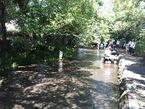 9/10 JR東海さわやかウォーキング開催:源兵衛川の生き物やミシマバイカモを解説