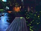 5/13(日)「第38回三島の川をきれいにする奉仕活動」における源兵衛川の清掃活動の「中止」のお願いの提出について