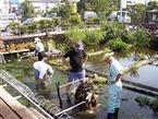 3. 미시마 바이카모(매화마름) 마을