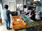【活動報告】7/25農業ボランティア定例作業(野菜の出荷準備、苗づくり)