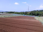 【活動報告】8/29農業ボランティア定例作業実施