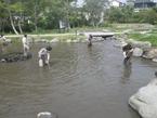 【参加者募集】5/15午後「境川・清住緑地湧水池清掃ワンデイチャレンジ」