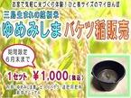【注文受付中】自宅で気軽に米づくり体験!ゆめみしまバケツ稲販売