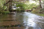 「水の都・三島」の湧水探検・楽寿園小浜池〜源兵衛川