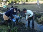 源兵衛川7ゾーン環境再生ワンデイチャレンジ1「外来動植物一掃・草刈り大作戦」