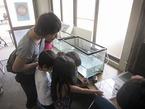 「源兵衛川ミニミュージアム」を開催・源兵衛川の生き物に触れました