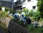 5/17鏡池ミニ公園の花の植え替え(三島建設業協力会様)