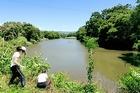 松毛川でのグラウンドワーク三島の取り組み(令和元年7月10日)